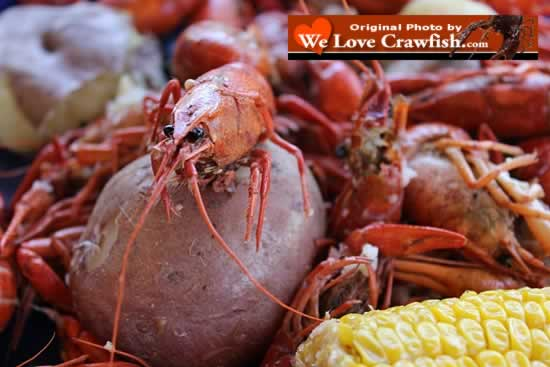 Enjoy crawfish in Louisiana, or order crawfish on the Internet and have crawfish shipped live to anywhere in the USA!