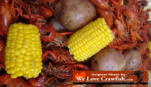 Photo of boiled Louisiana crawfish, corn on the cob, and new potatoes, hot out of the boiler