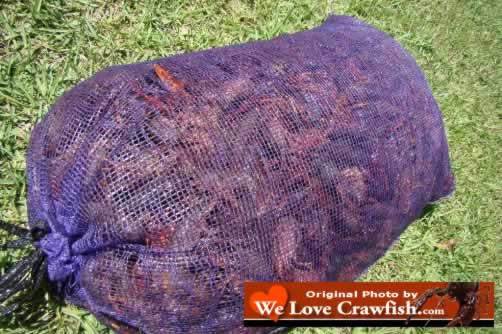 Photo of a sack of fresh, live Louisiana Crawfish, right out of the swamp or off the crawfish farm!
